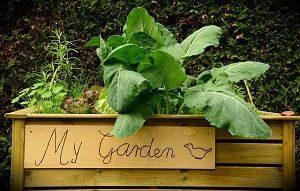 Gemüse aller Art findet man im Hochbeet